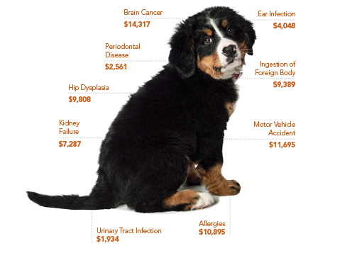 Petplan Dog Insurance | Costs of Caring